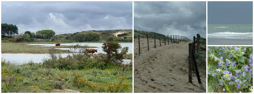 Strandwandeling en duinwandeling Kennemerduinen
