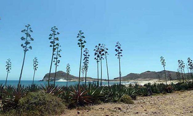 Playa de los Genoveses, een van de mooiste stranden van Zuid-Spanje