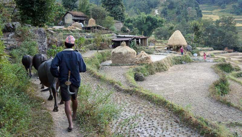Rijstvelden bij Bahundanda in Nepal