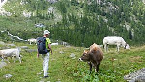 Klim naar Colle del Turlo - Tour de Monte Rosa