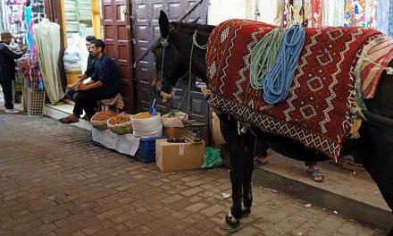 Opzij, opzij voor de ezeltjes in de medina van Fez