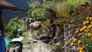 Ezeltjes Kanchenjunga Trek Nepal