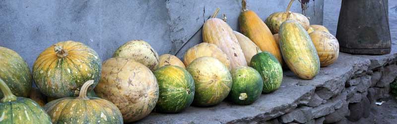 Pompoenen en komkommers in Nepal