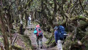 Rododendronbos Kanchenjunga Trek Nepal