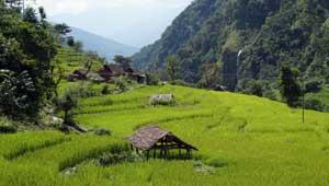 Tapljejung - Chirwa - Kanchenjunga - Nepal
