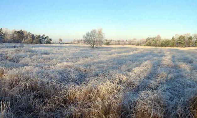 Sfeervolle winterwandeling over Landschotse Heide (19 km)