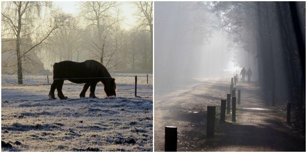 Winterwandeling over de Landschotse Heide langs de twee beken: de Grote Beerze en de Kleine Beerze